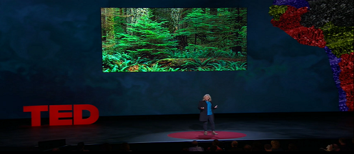 Photo of Suzanne Simard: How Trees Talk to Each Other