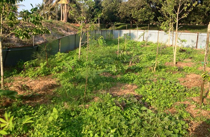 establishing-ground-cover-and-trees-on-a-small-food-forest-we-started