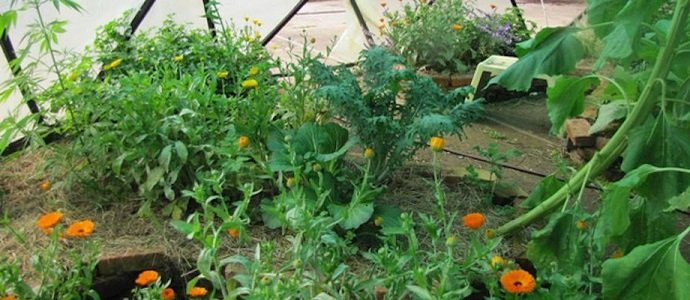 Photo of Guilds for the Small Scale Home Garden