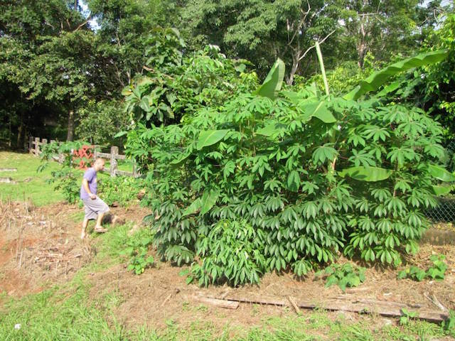 A Roadside Guerilla Garden Outside of a Property in Panama To Share Techniques and Produce with Local Neighbors (Emma Gallagher)