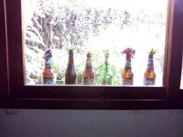 Cuttings on the Windowsill (Emma Gallagher)
