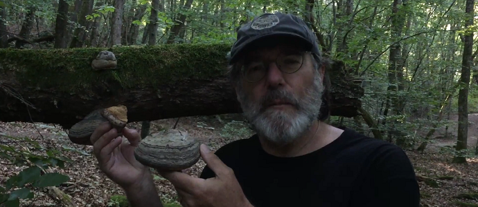 Photo of Fomes Fomentarius in the French Alps and Paul Stamets