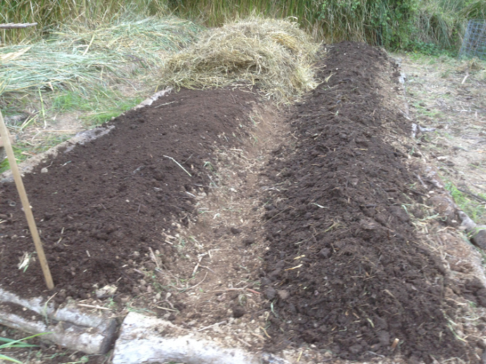 The composted beds getting a layer of mulch.
