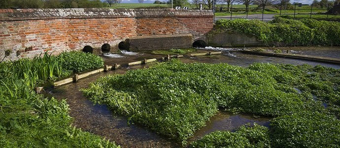 Photo of How To Grow Watercress At Home, One Of The Most Nutritious Vegetables