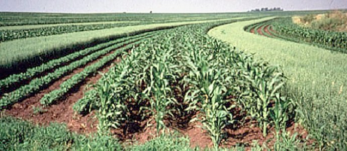 Photo of Intercropping: What It Is, What It Isn't, and Why We Do It