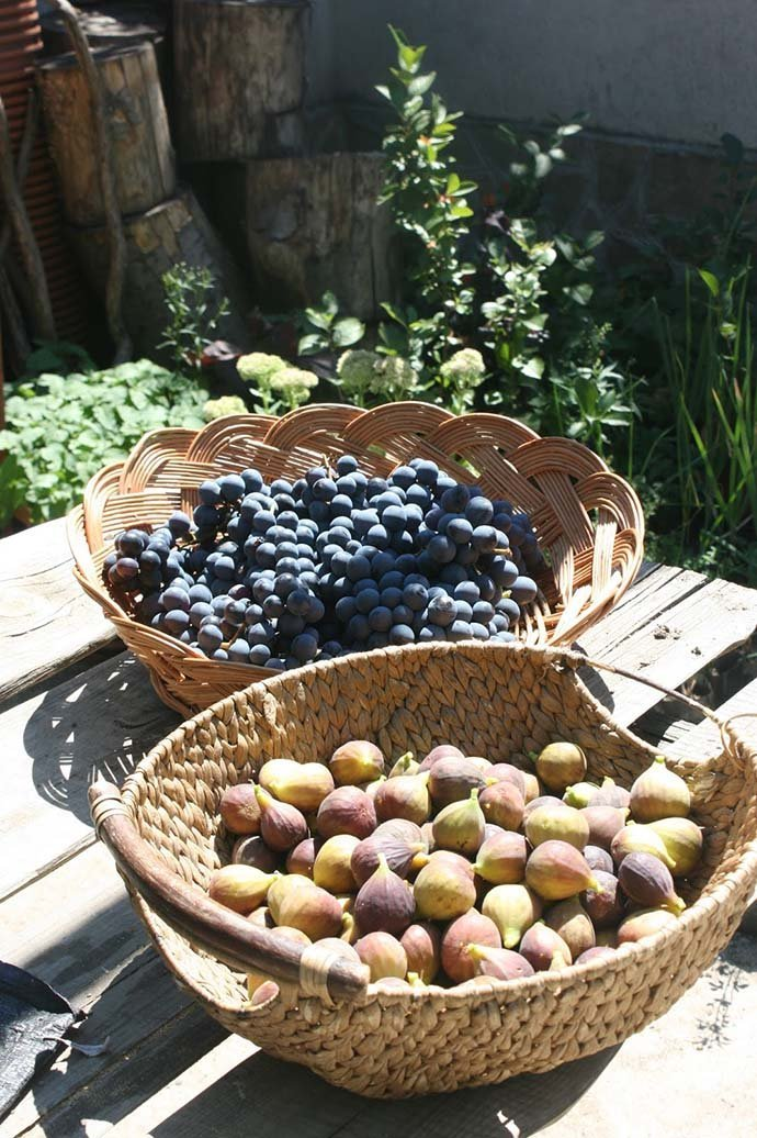 'Michurinska 10'  and grape harvest from our forest garden.