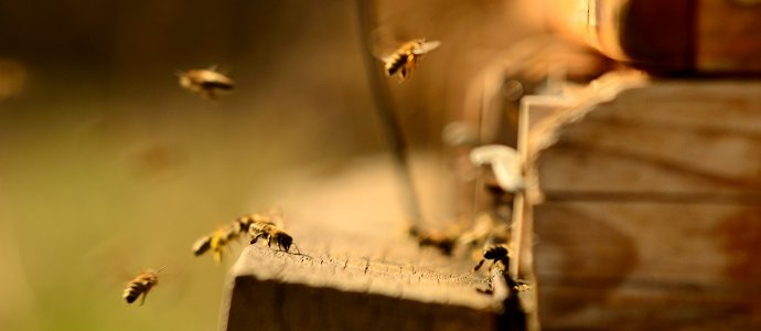 Photo of BeeConnected: Linking Farmers and Beekeepers to Save Bees in the UK