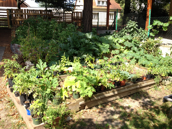 Permaculture gardens in summer growth