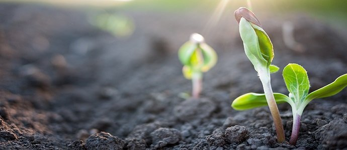 Photo of Soil