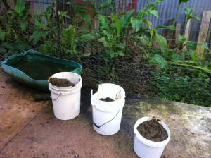 Buckets filled with cow manure to make biogas in the biodigester