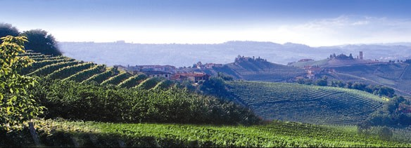 A view of the Langhe with typical vineyards