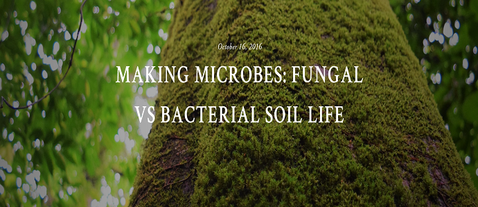 Photo of Making Microbes: Fungal vs Bacterial Soil Life