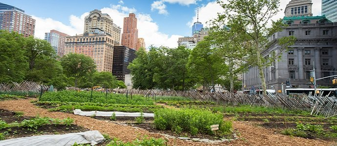 Photo of Understanding Urban Agriculture – Part 2, Productivity, Potential and Possibilities