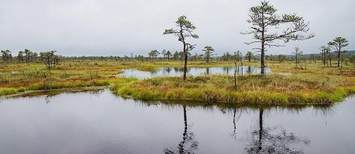 Photo of Peat Soils