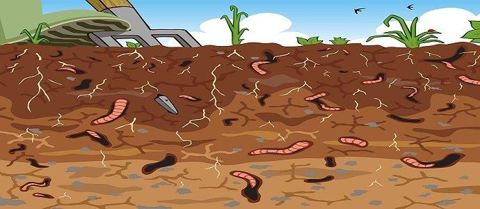 Photo of The Soil Profile