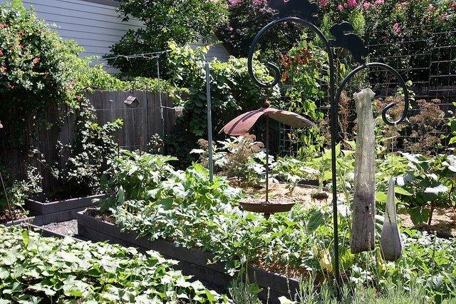 Urban Harvest Tour – Rotation Beds (Courtesy of Jonti Bolles)