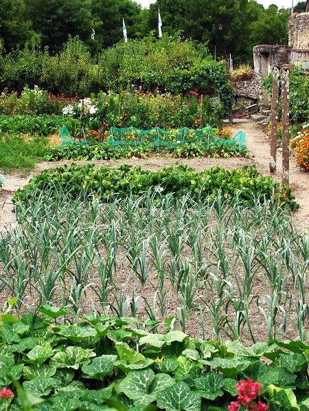 Vegetable patch2