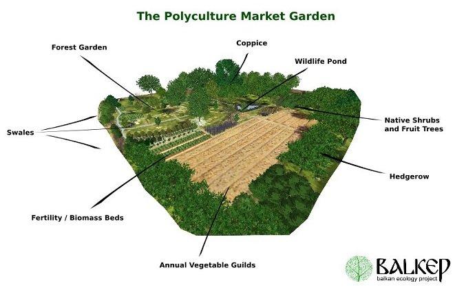 Polyculture Trials 01