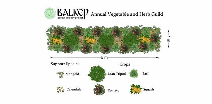 Polyculture Trials 04