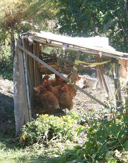 The chicken run 1.3 x 3 m light frame bottomless coop.