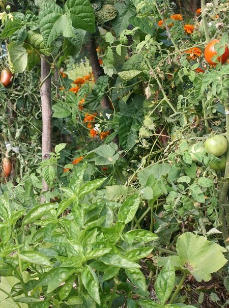 The polyculture in the summer.