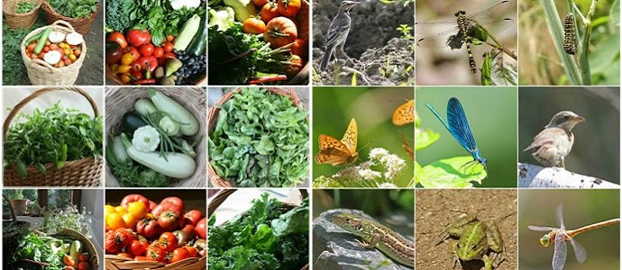 Photo of Polyculture Trials 2016 – Home Garden Records