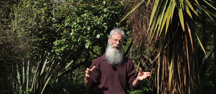Photo of Thriving 23-Year-Old Permaculture Food Forest – An Invitation for Wildness