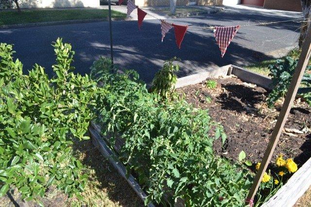 Dig up nature strip. Grow food.