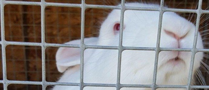 Photo of Raising Rabbits: My Source of Manure