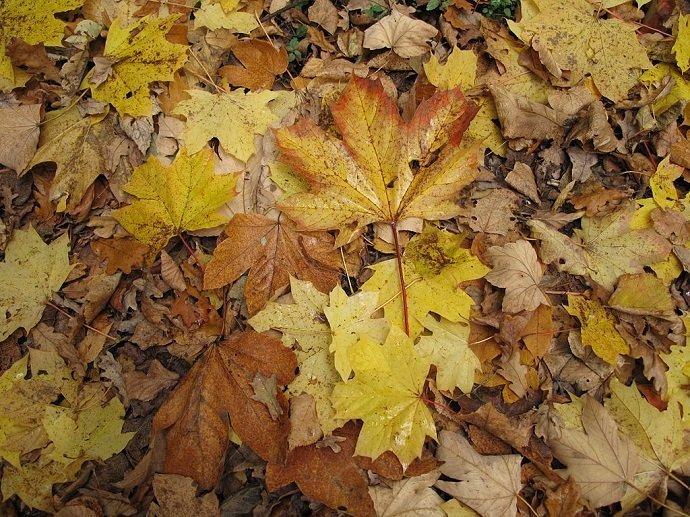 Leaves (courtesy of Wikimedia)