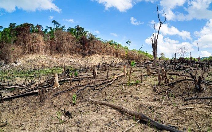 Deforestation in the Philippines