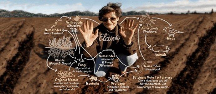 Photo of Soil Foodweb