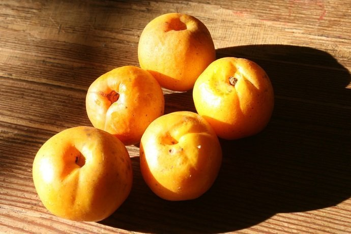 The Quincessential Guide to Japanese Quince 06