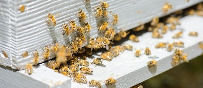 """Photo of Insecticide use by nearby cotton farms is causing """"devastating"""" losses for an Australian bee keeper."""