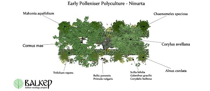 Photo of The Early Polleniser Polyculture – A Support Polyculture for Orchards, Farms and Gardens