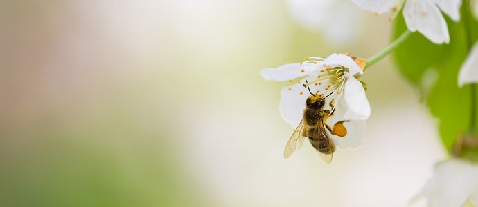 Photo of Production of bee-friendly insecticide to remain in Australia