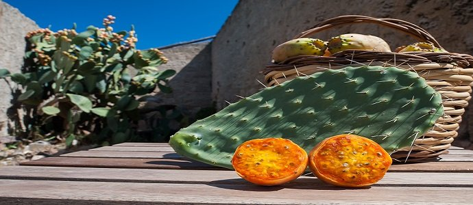Photo of Prickly Pear Perfection