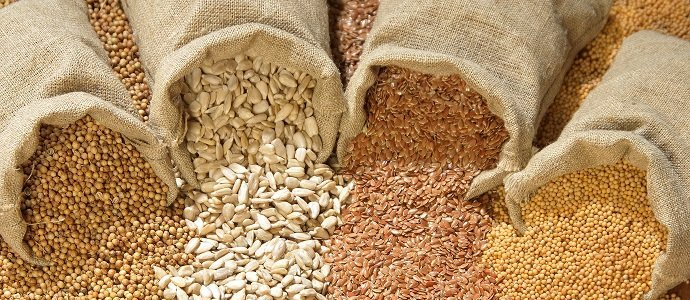 Photo of Seed Banking and its Benefits