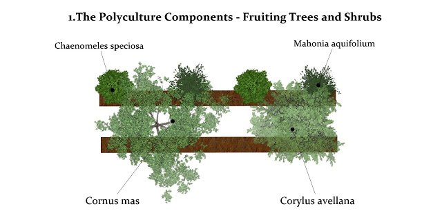 Planting scheme for Fruiting Trees and Shrub component