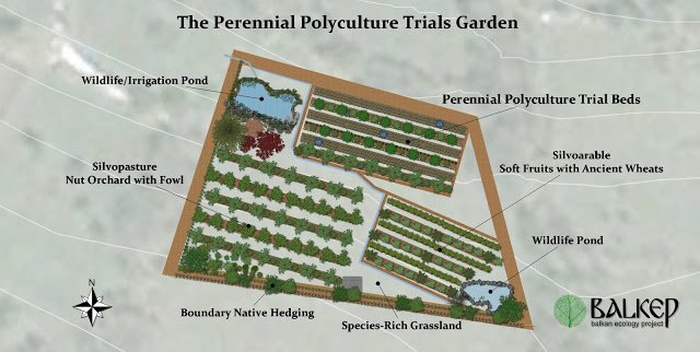 Illustration of our new Perennial Polyculture Trials Garden coming in 2017
