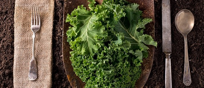 Photo of All Hail Kale!