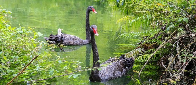 Photo of Land As Insurance, Part 2: The Black Swan Theory