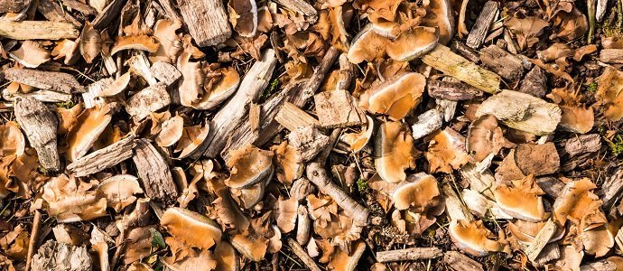 Photo of Gardening with Woodchips: What, Why, How and Who?
