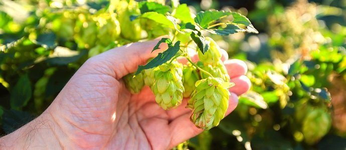 Photo of Pure Hop-iness
