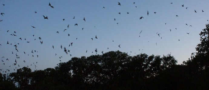 Photo of Beckoning the Bats: What They Do for Our Gardens and How to Attract Them There