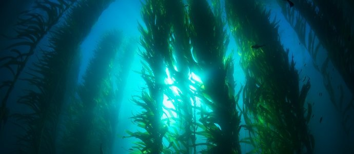 Photo of How Seaweed can Help Save the World