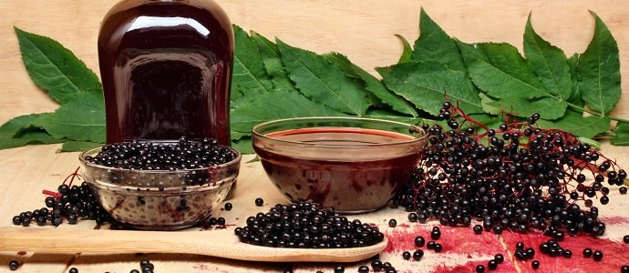 Photo of The Benefits of Growing Elderberries