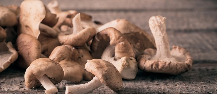Photo of Raising Shiitake Mushrooms: An Inexpensive Delicacy