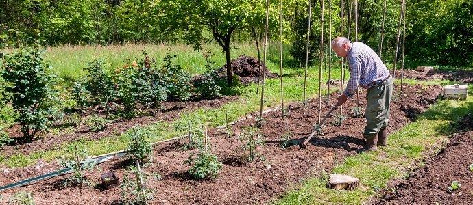 Photo of How Permaculture is the Perfect Match for Homesteading