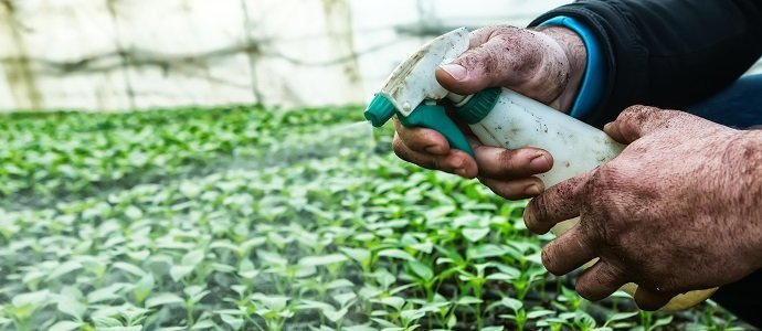 Photo of Organic Pesticides, Biological Controls, and Finding what Can Be Grown